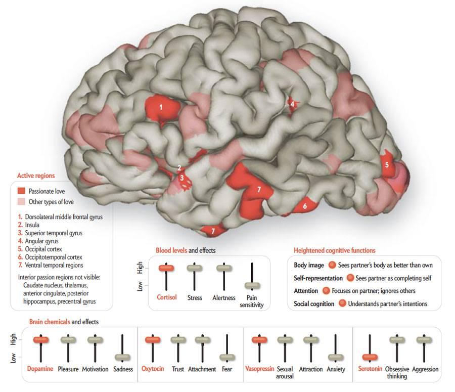 braininlove
