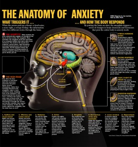 anatomie anxiété - anatomy of anxiety